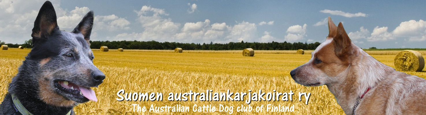 Suomen australiankarjakoirat ry – The Australian Cattle Dog club of Finland