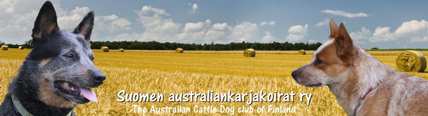 Suomen australiankarjakoirat ry – The Australian Cattle Dog club of Finland